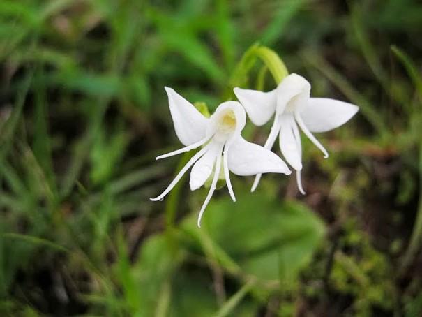 цветы в виде животных 9