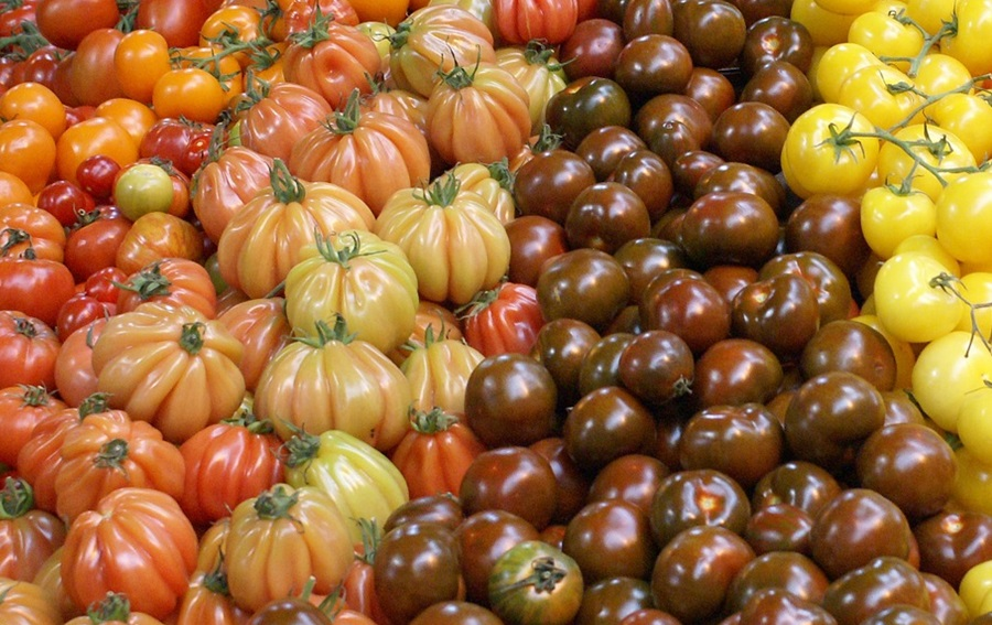 лучшие сорта помидоров 1