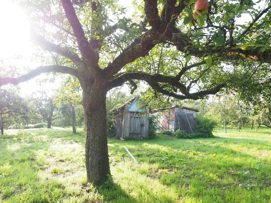 засоленные почвы и сад