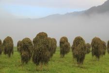 Как определить качество сена?