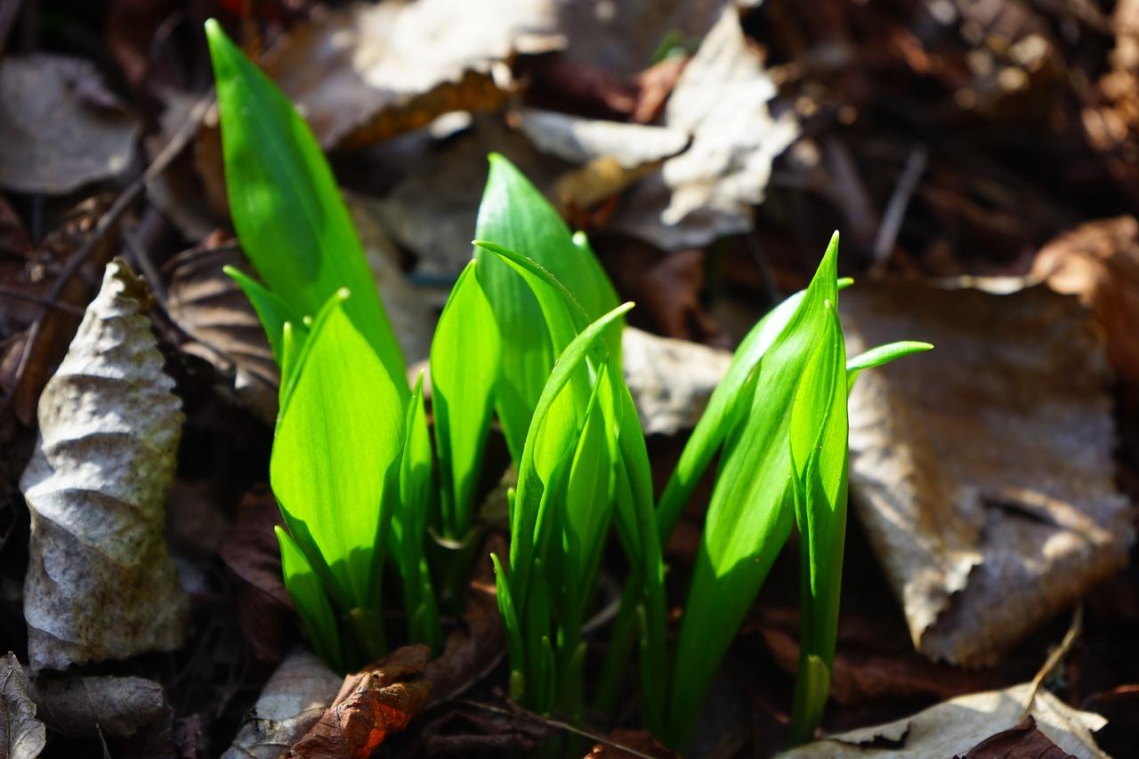 апрель на огороде