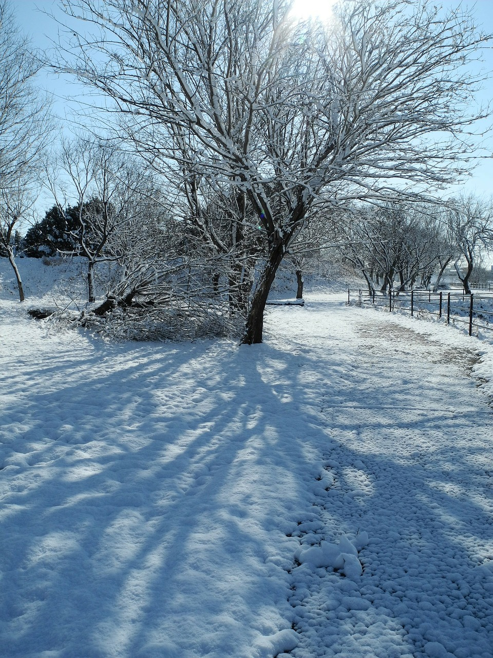 декабрь фото