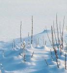 Как укрыть растения на зиму?