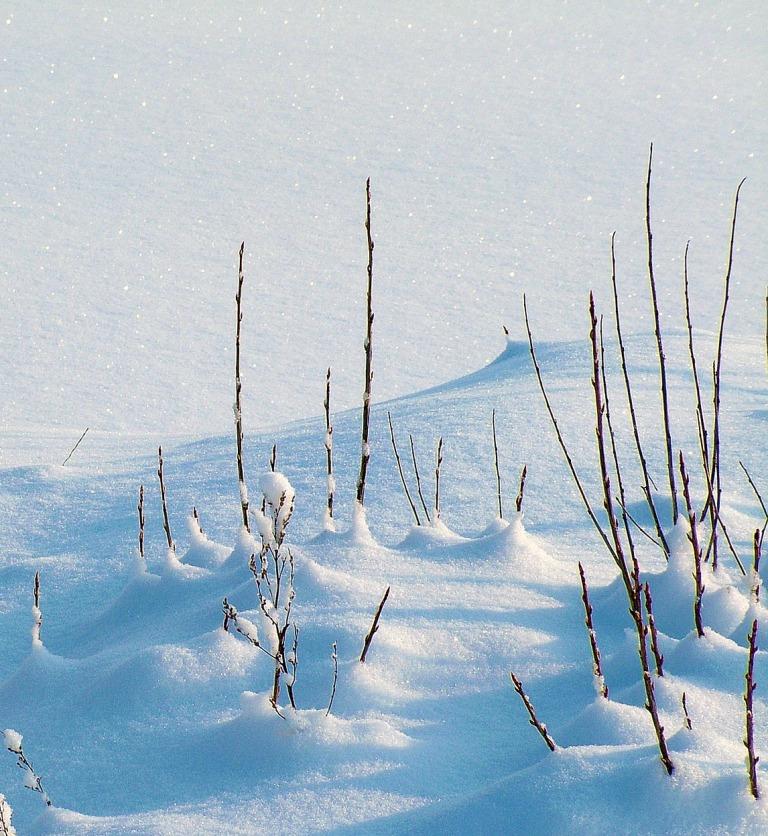 как укрыть растения на зиму