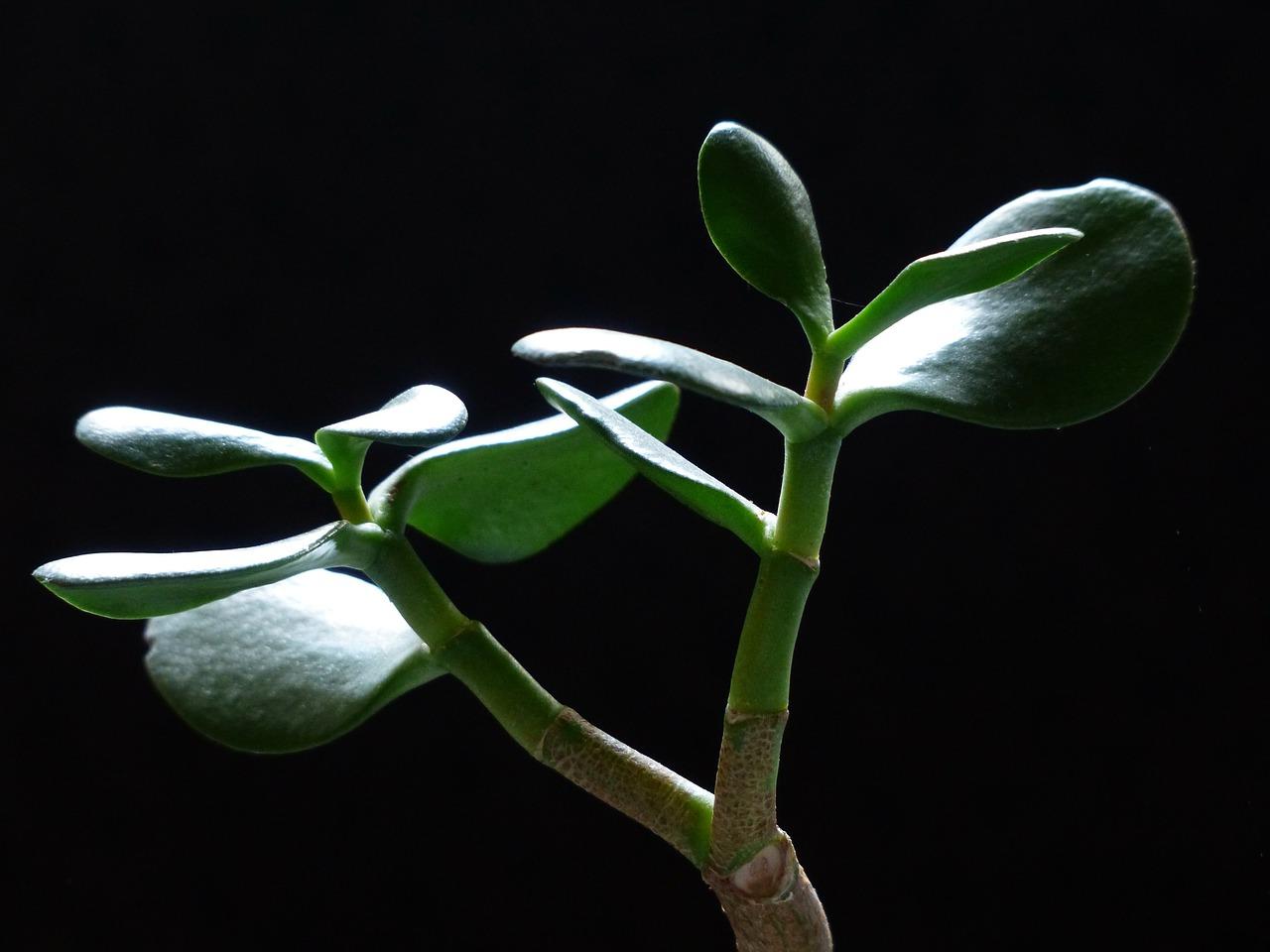 тля на комнатных растениях лечение
