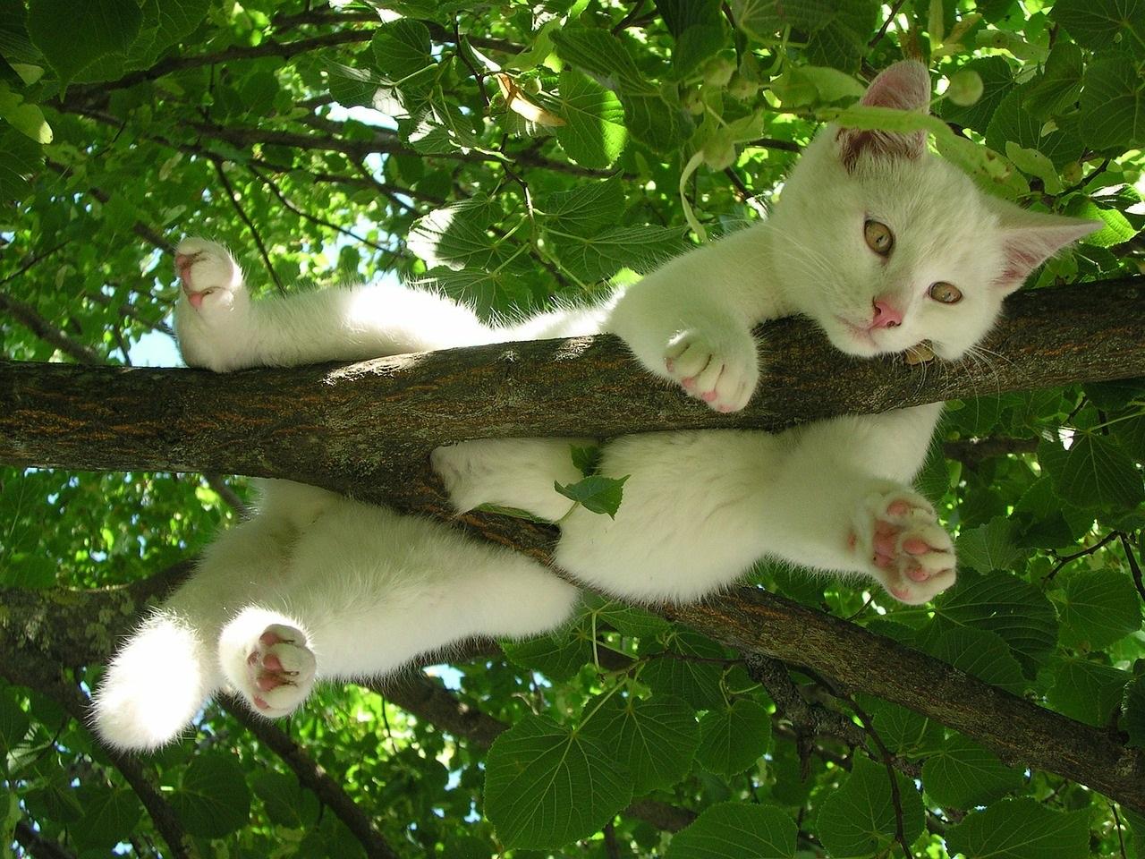 белые коты и кошки фото (4)