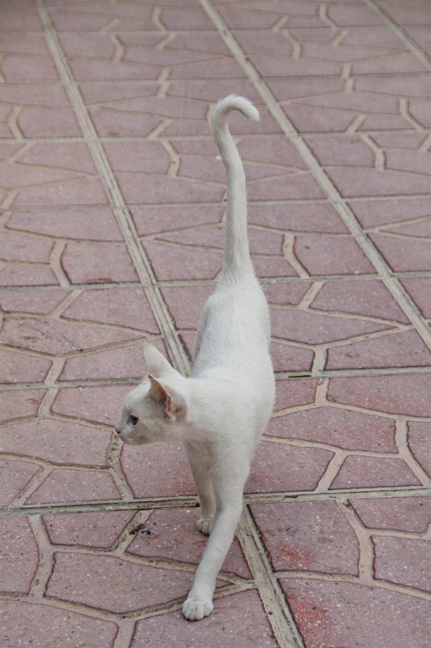 белые коты и кошки фото (9)