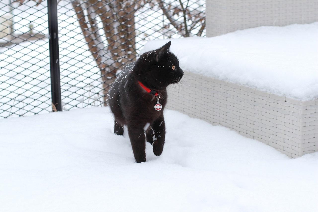 коты и кошки зимой в снегу фото (1)