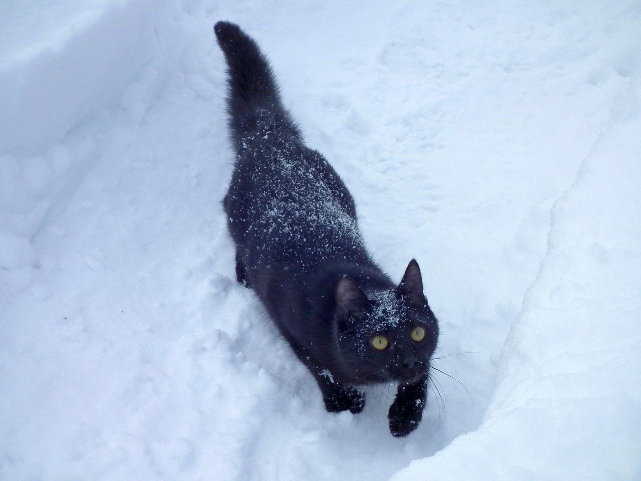 коты и кошки зимой фото (2)