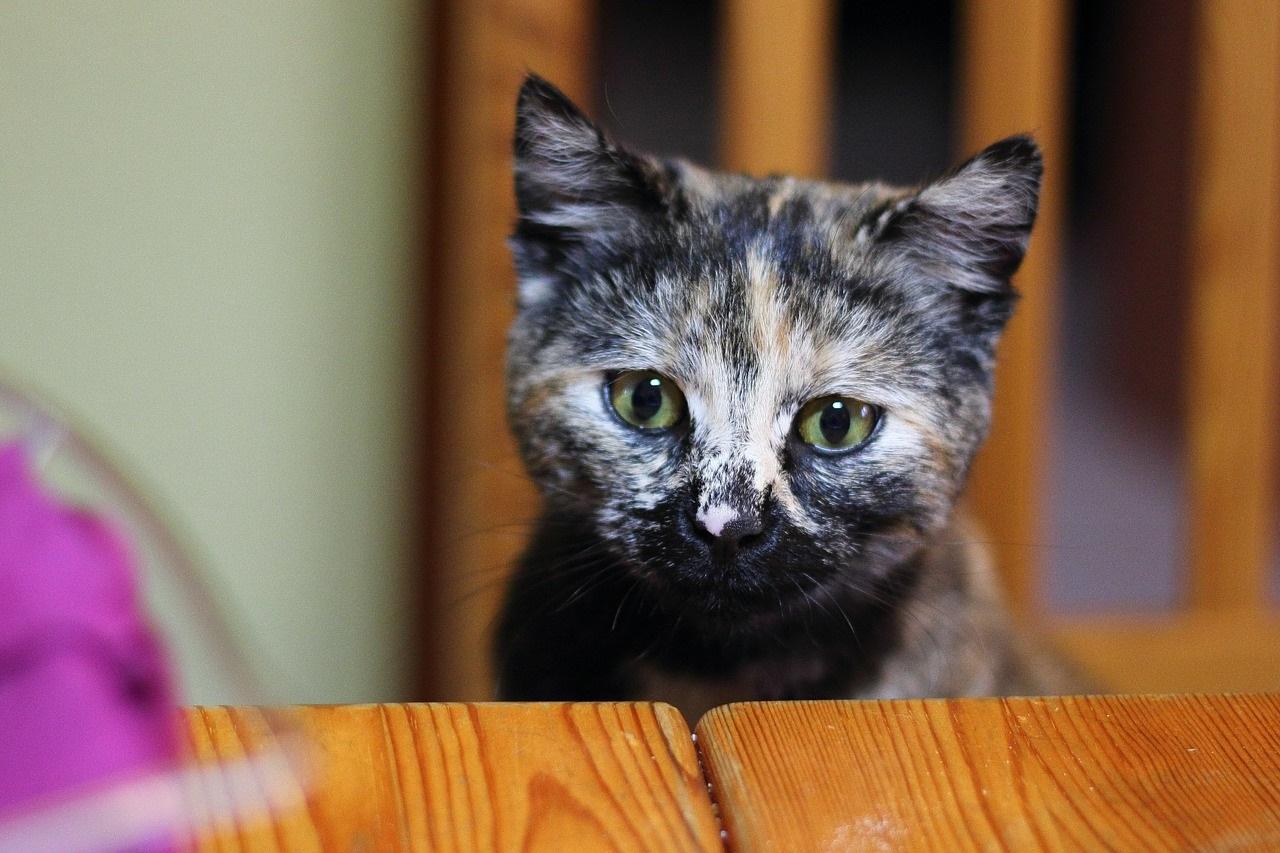 коты фото 3