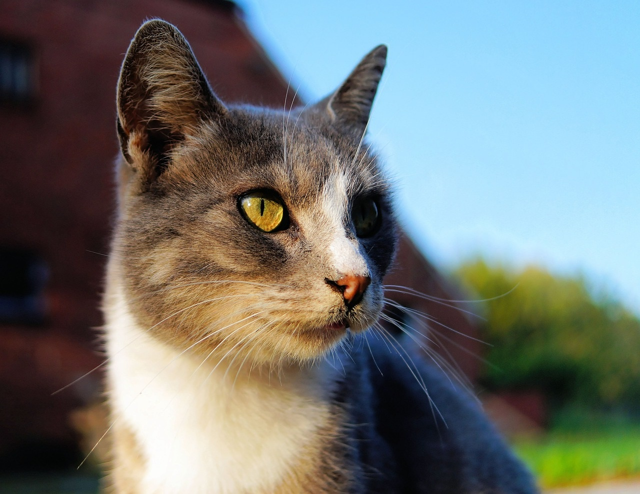 коты фото 31