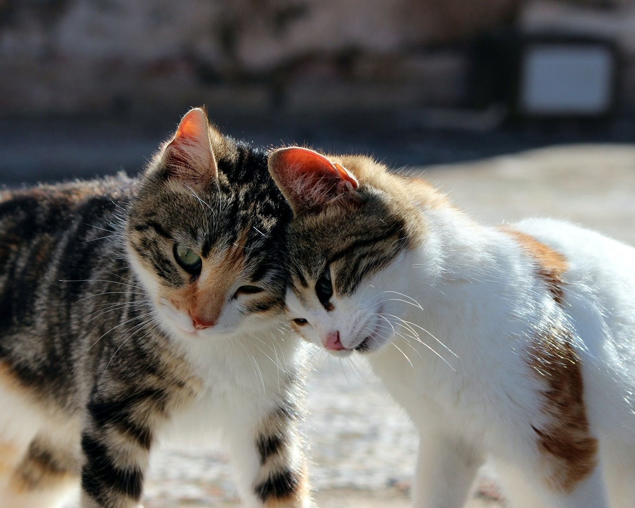 коты фото 32