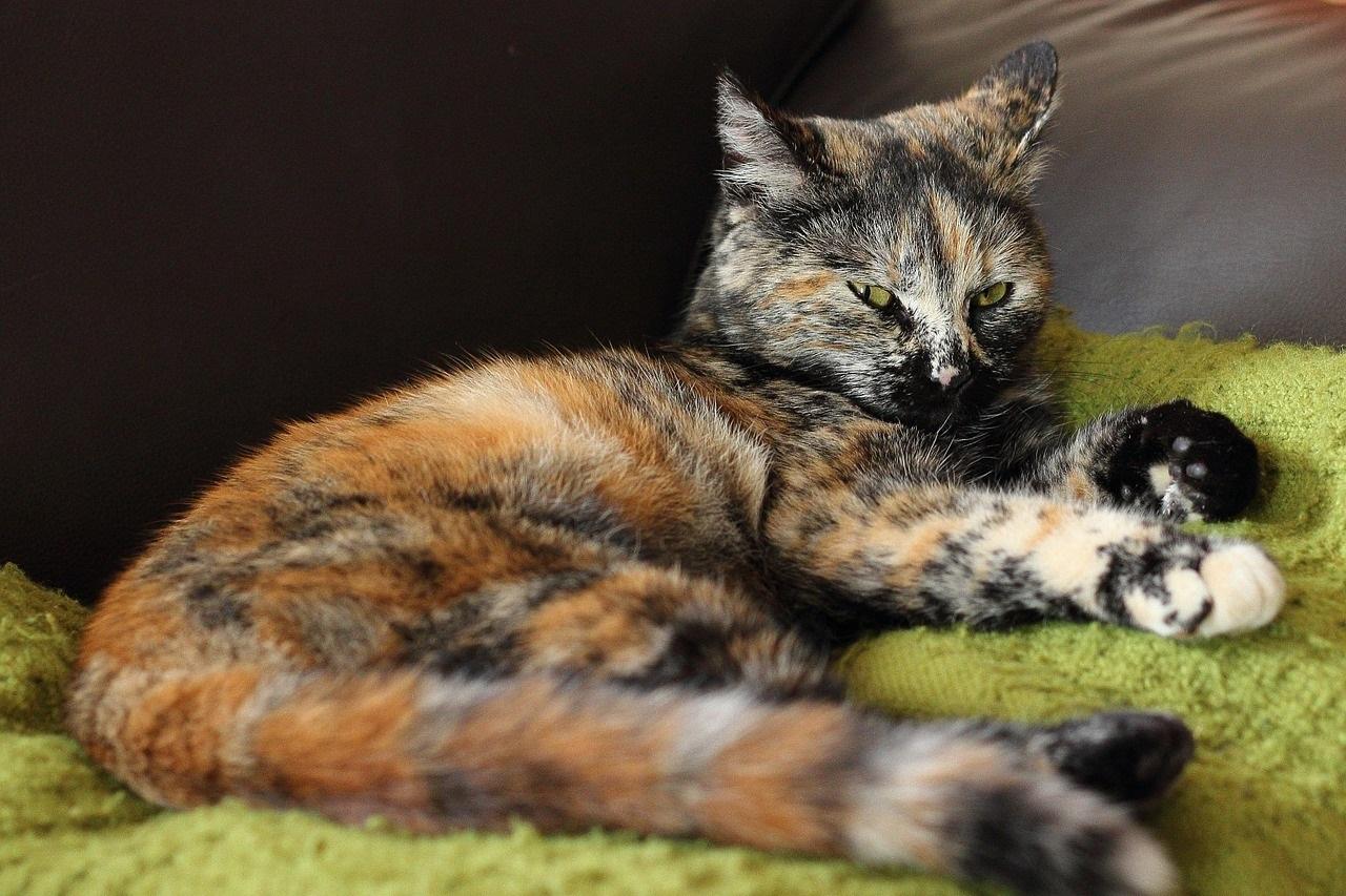 коты фото 4