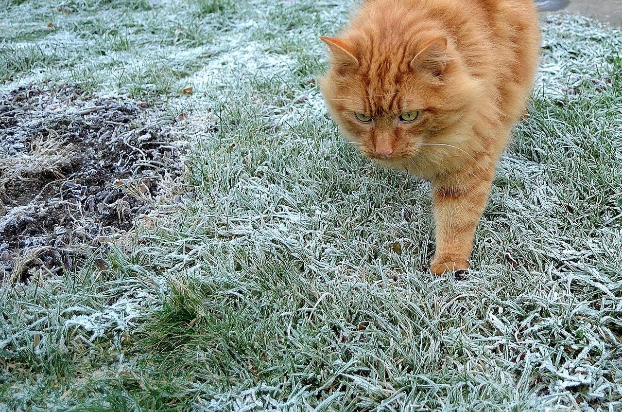 кошки и коты зимой фото (2)