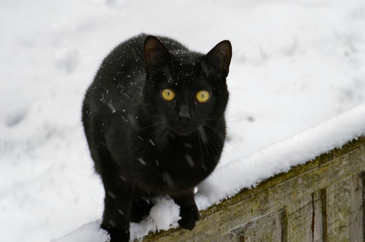 кошки и коты зимой фото (3)