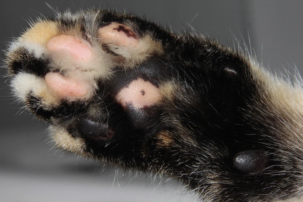 лапа кота фото (10)