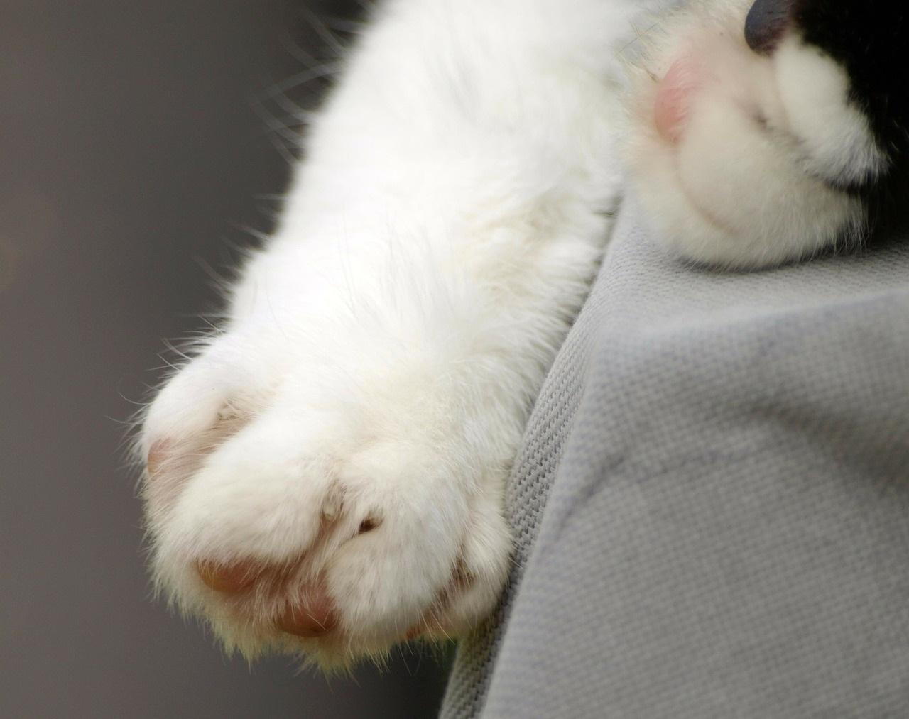 лапа кота фото (14)