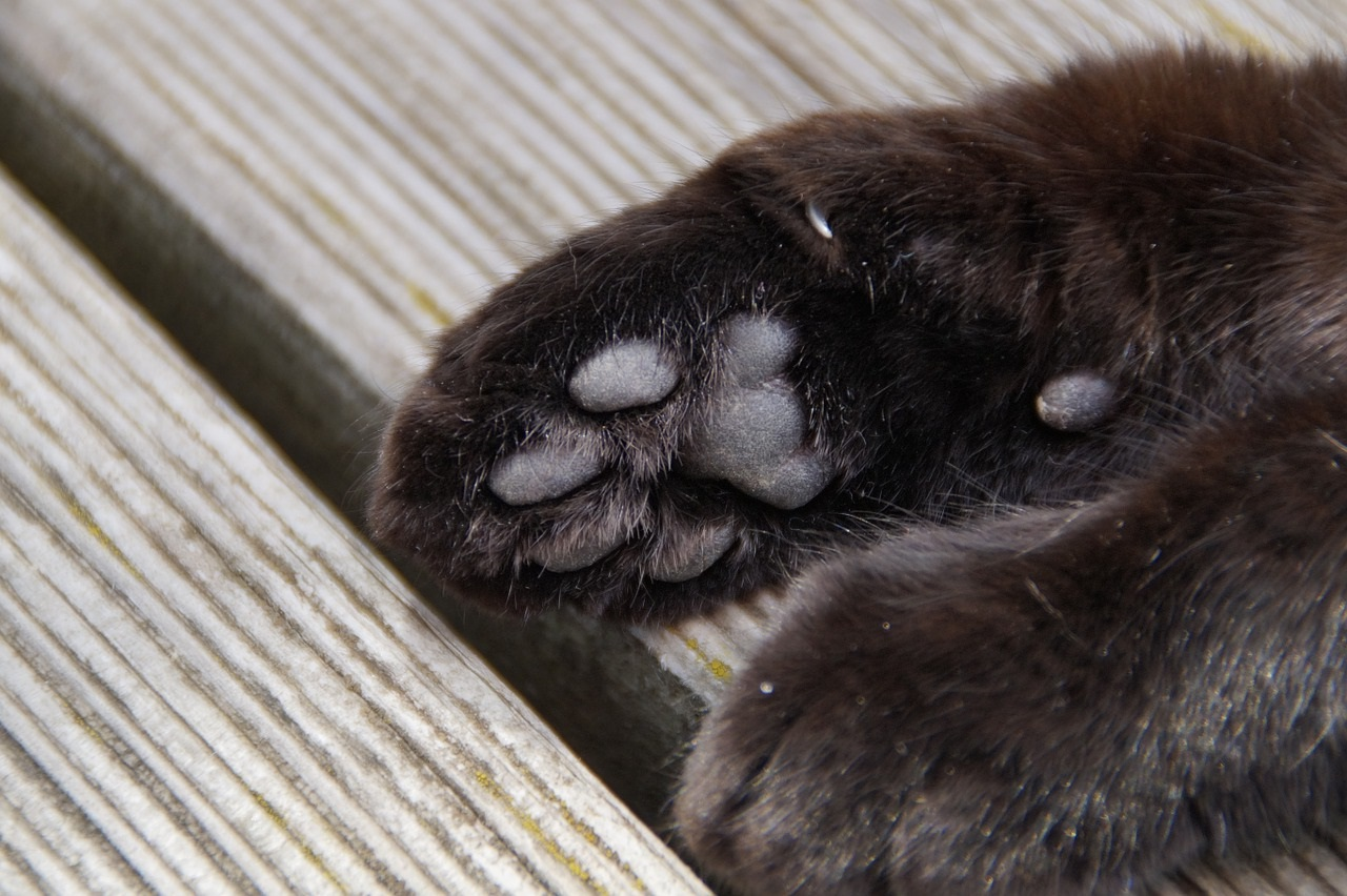 лапа кота фото (17)