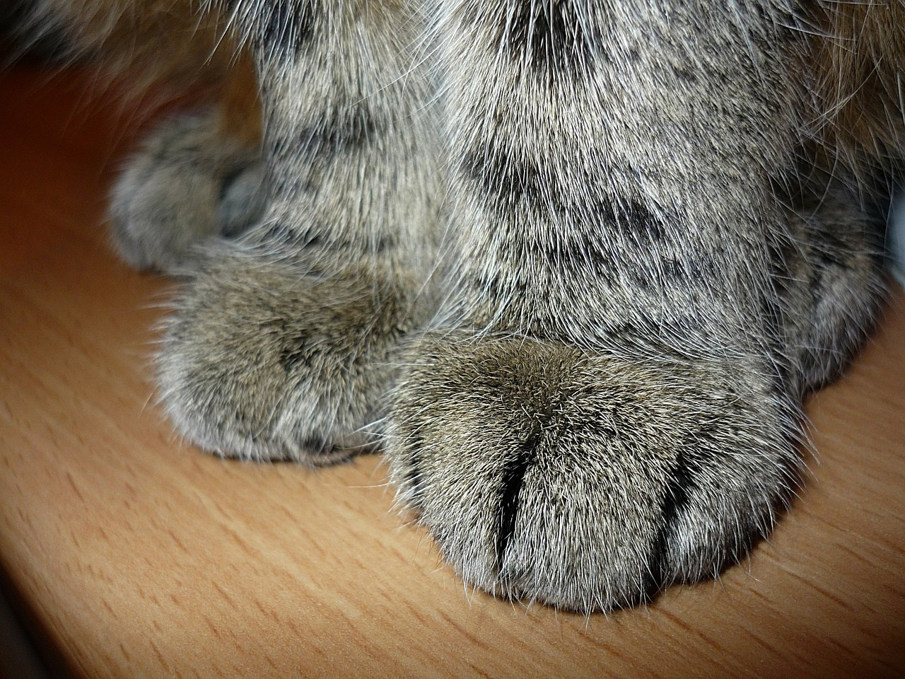 лапа кота фото (4)
