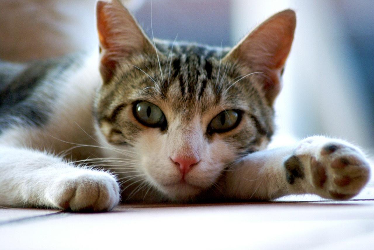 лапа кота фото (6)