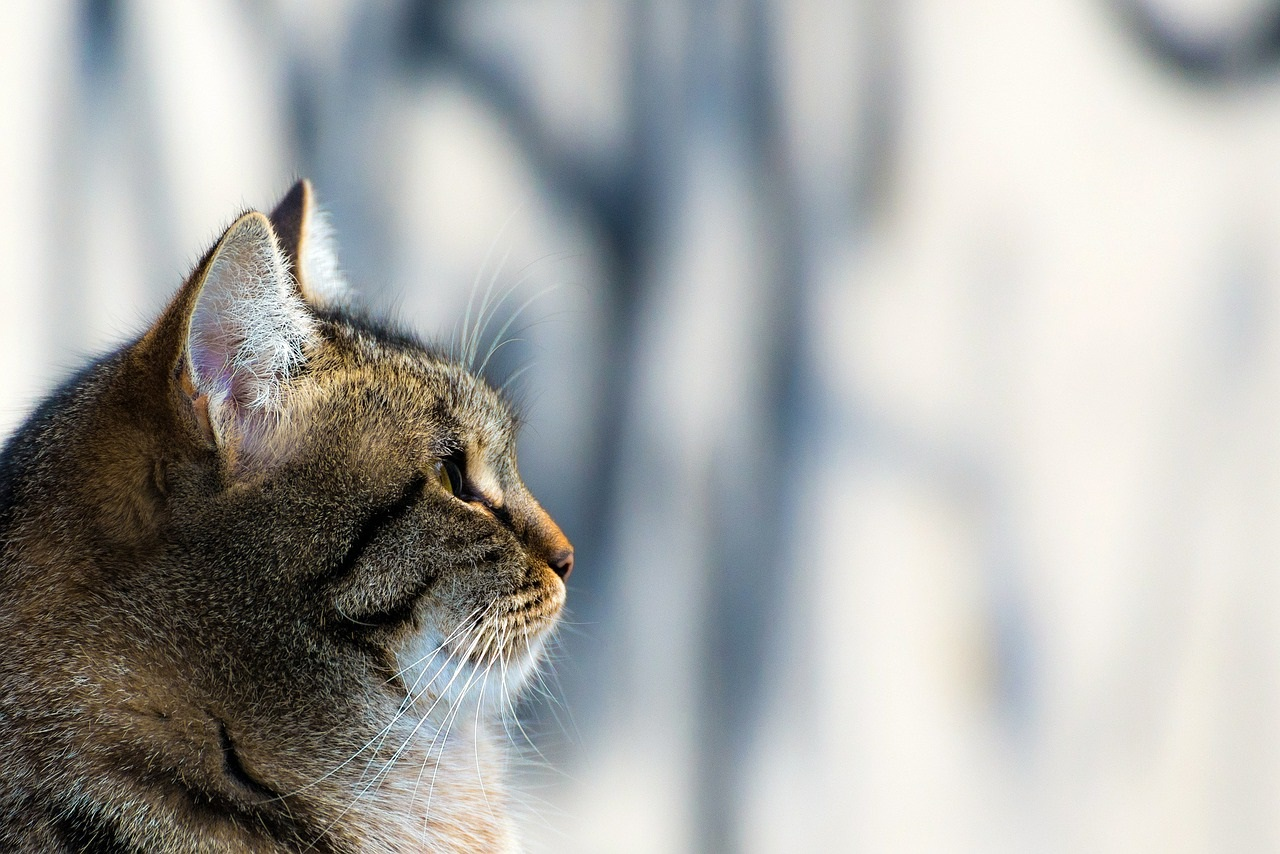 прикольные фото котов (1)