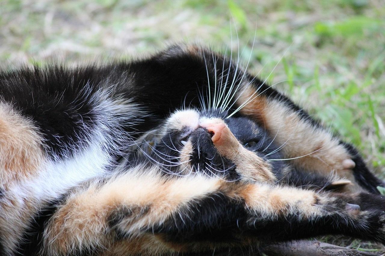 прикольные фото котов (11)