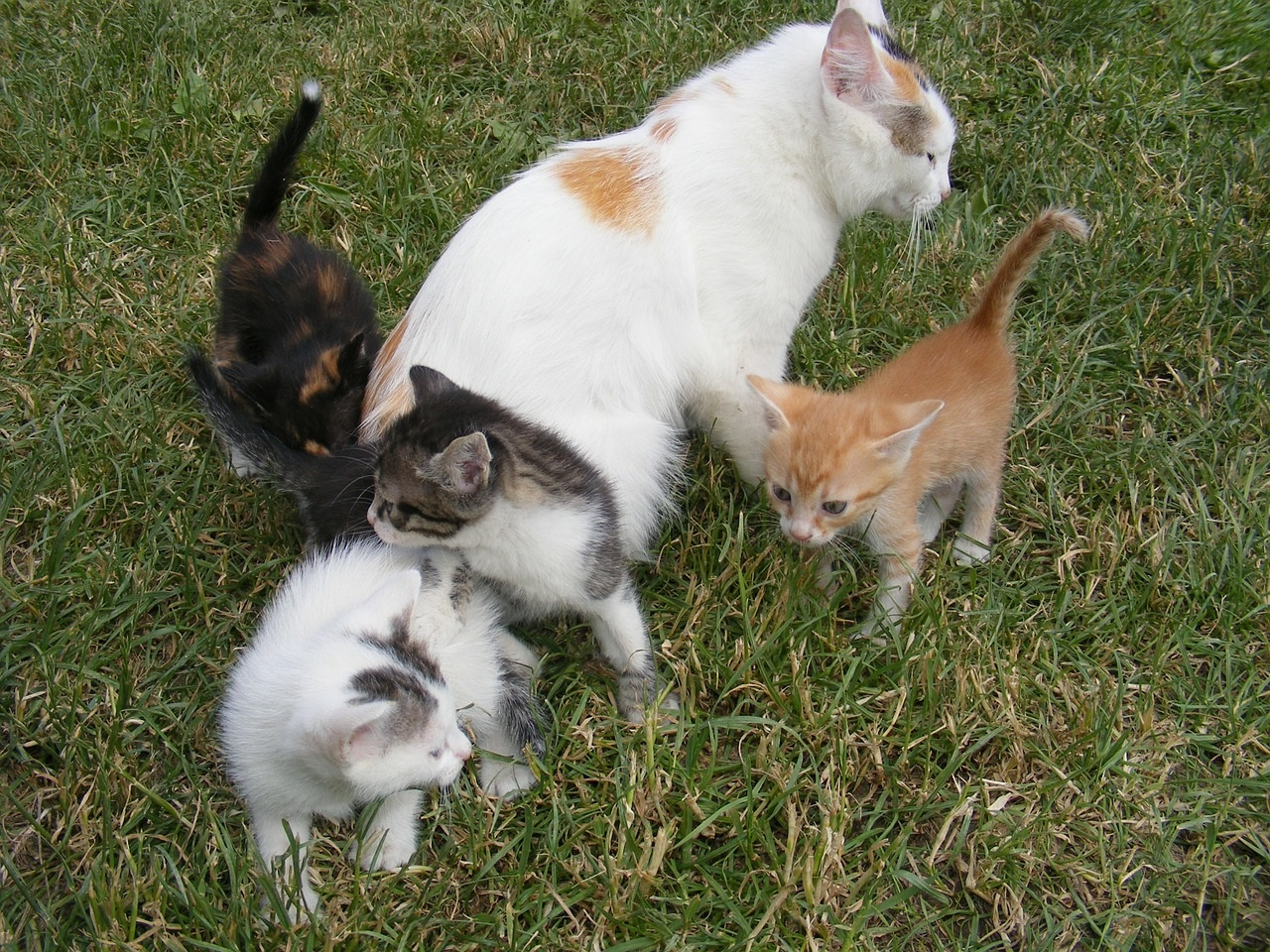 прикольные фото котов (13)