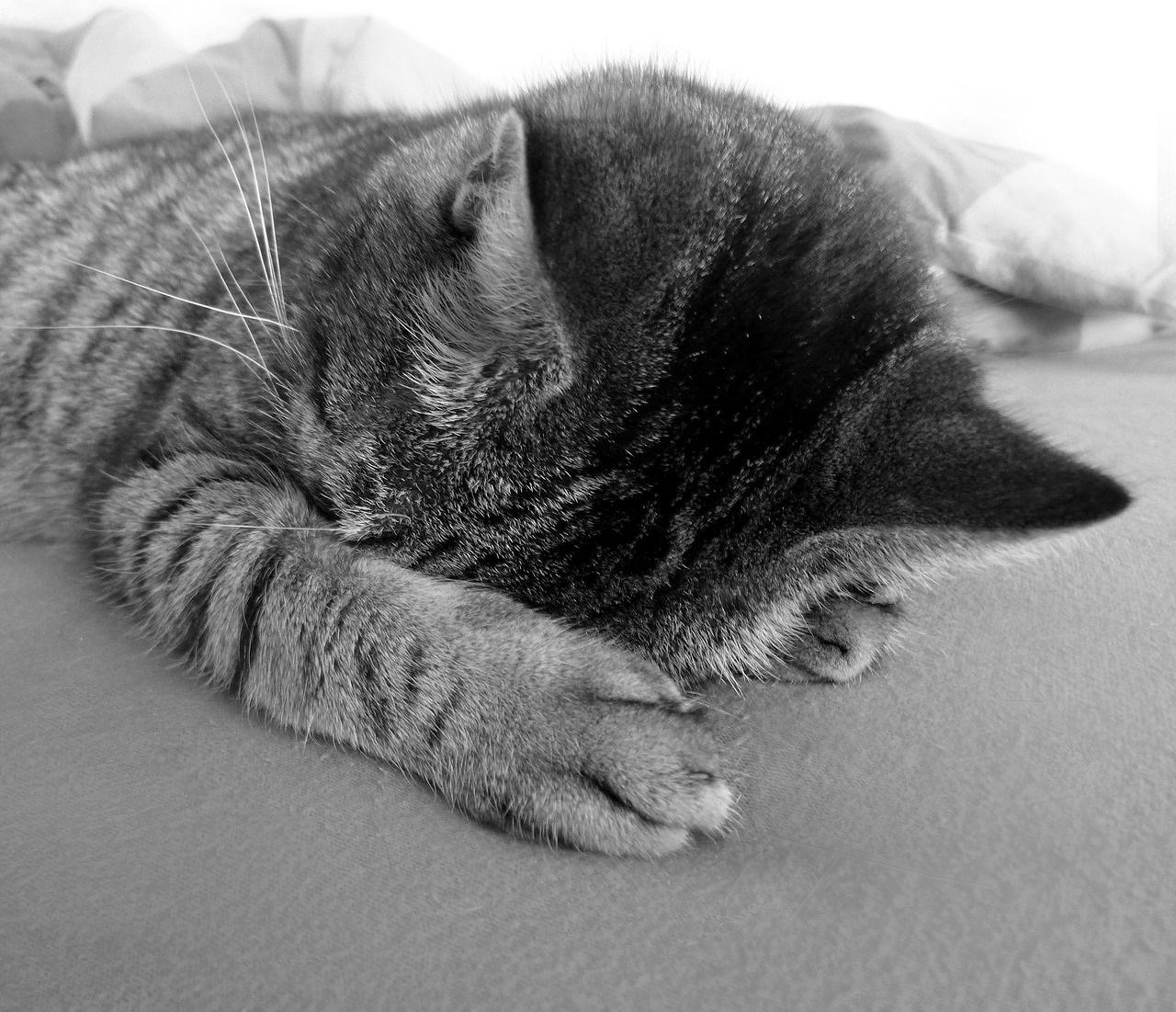 прикольные фото котов (14)