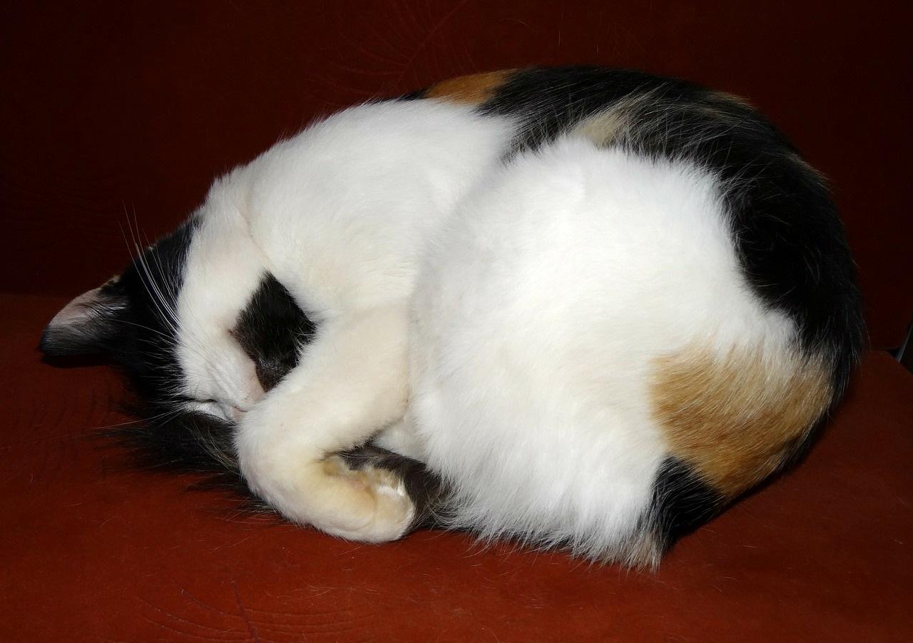 прикольные фото котов (16)