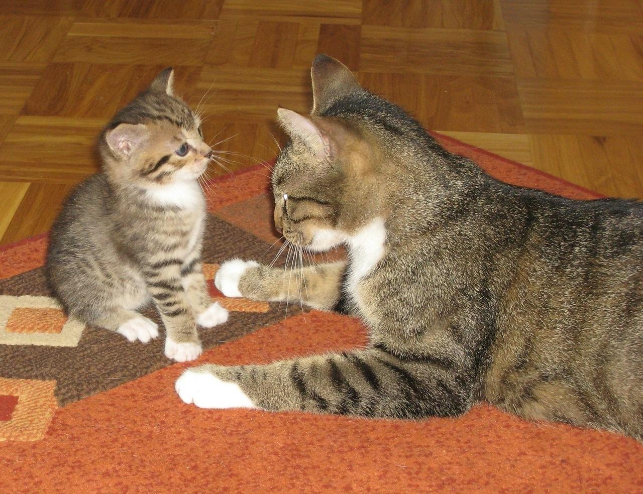 прикольные фото котов (17)