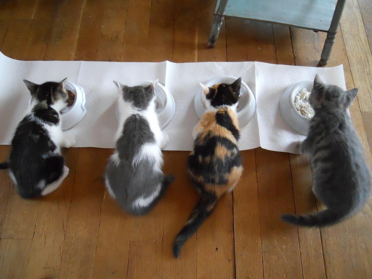 прикольные фото котов (20)