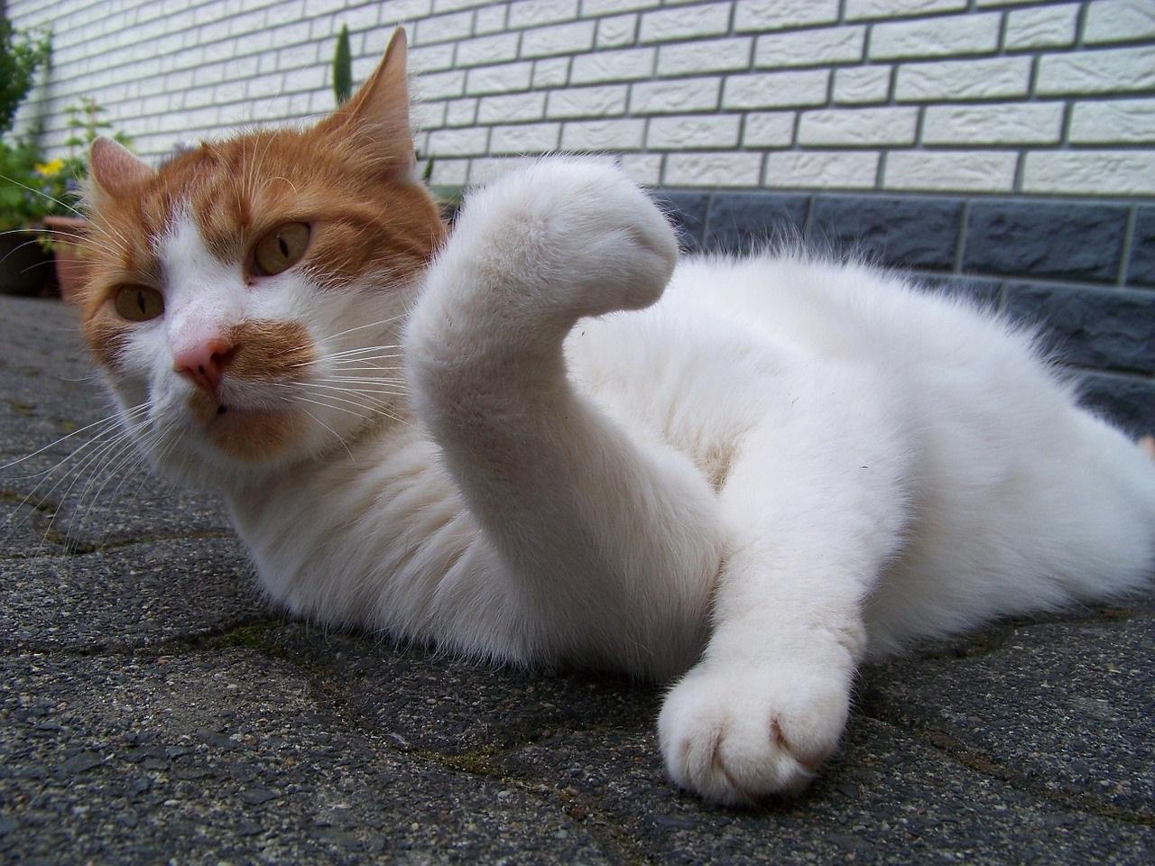 прикольные фото котов (21)