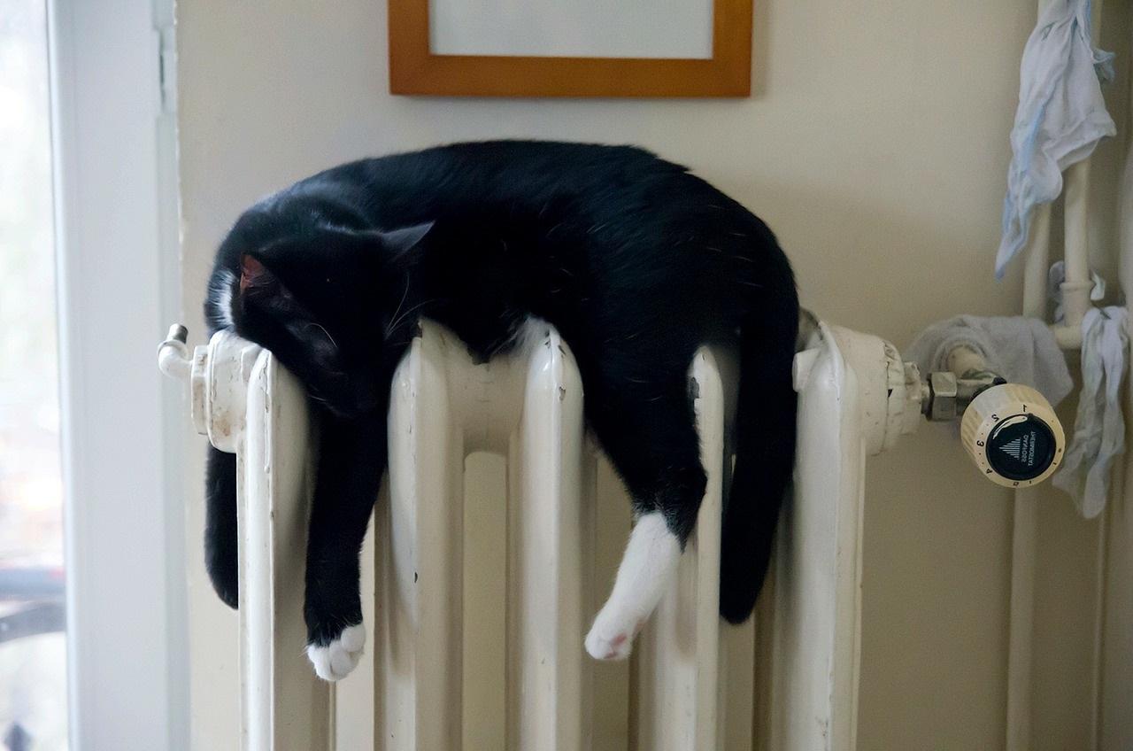 прикольные фото котов (22)