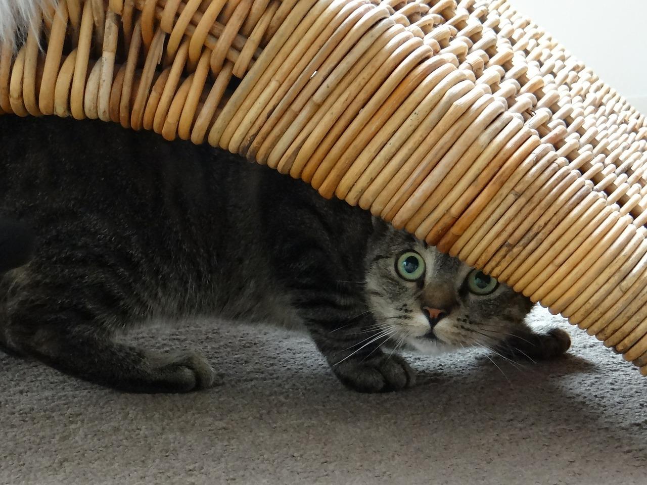 прикольные фото котов (26)
