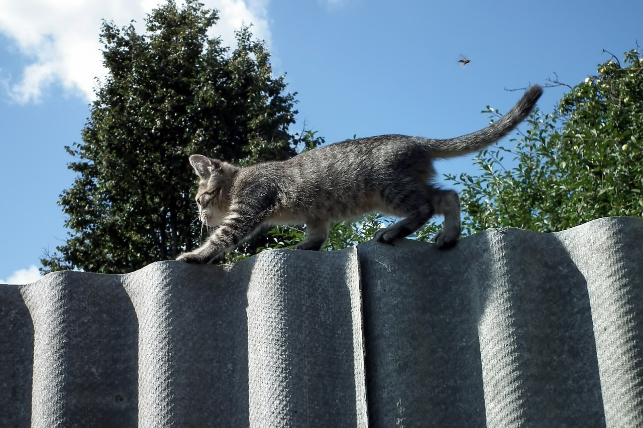 прикольные фото котов (29)