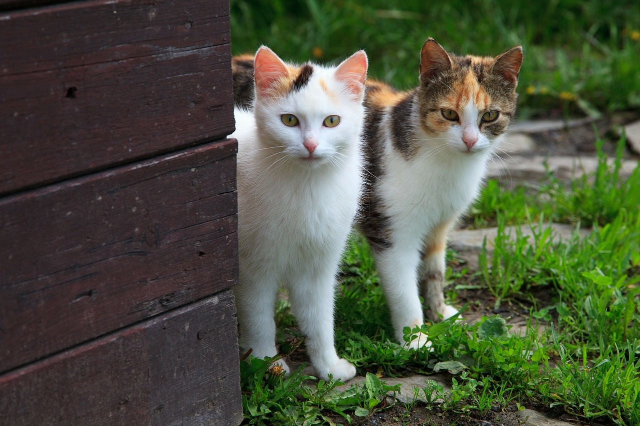 прикольные фото котов (3)