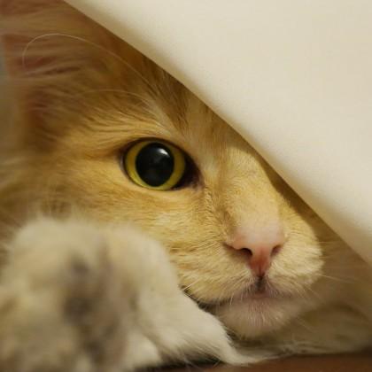 Смешные коты — 10 интересных фактов, 40 фото