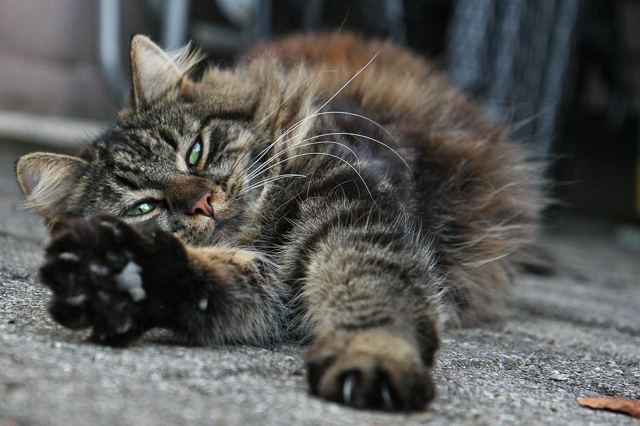 прикольные фото котов (33)