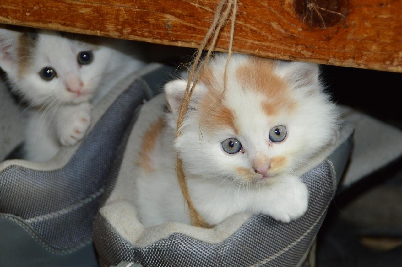 прикольные фото котов (34)
