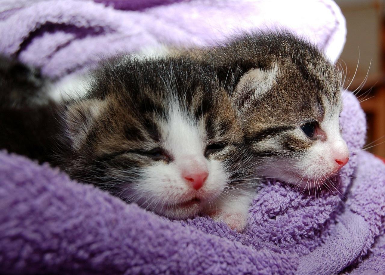 прикольные фото котов (35)