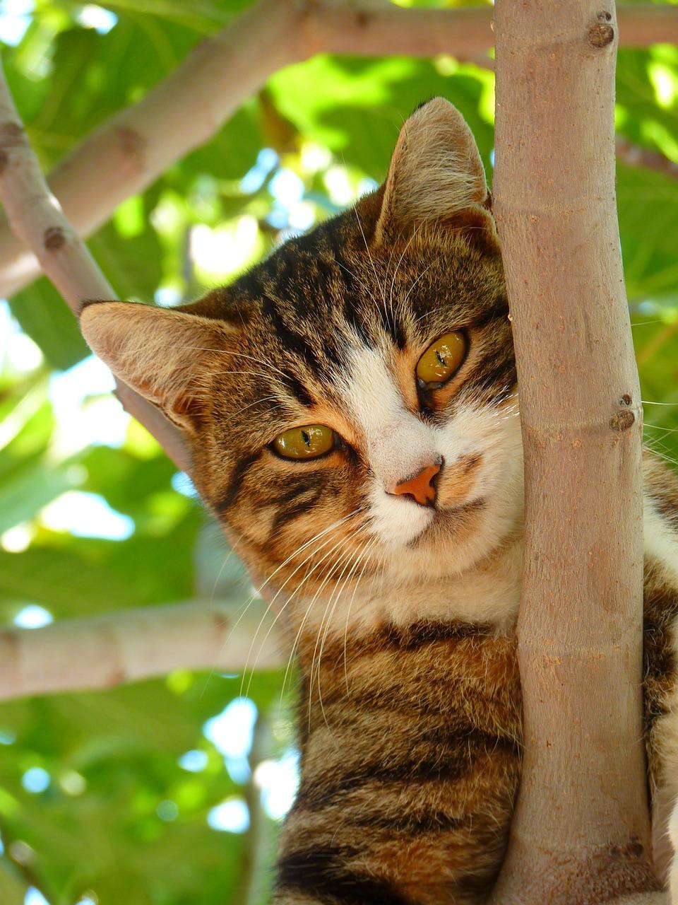 прикольные фото котов (39)