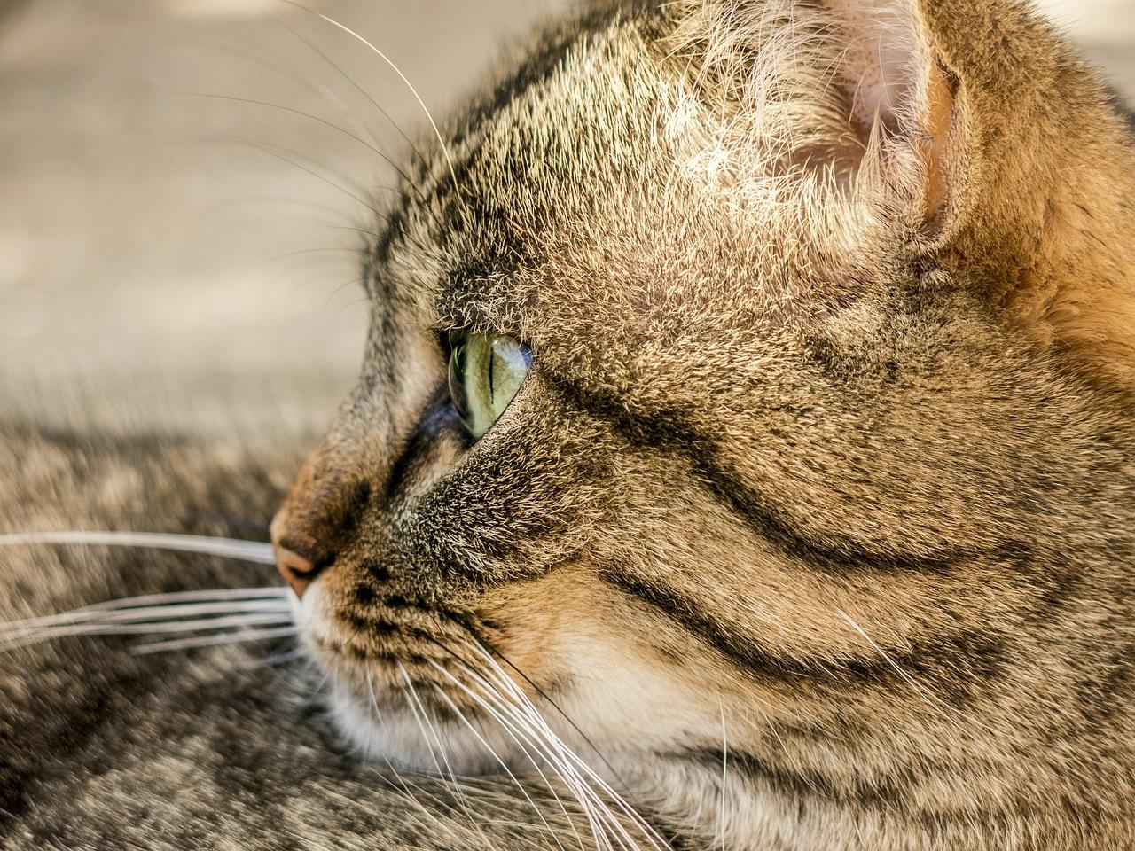 прикольные фото котов (40)