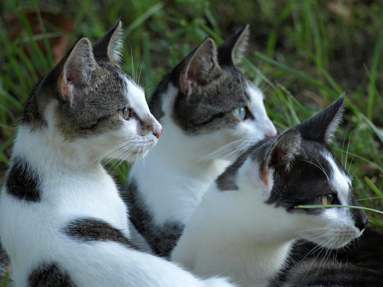 прикольные фото котов (41)