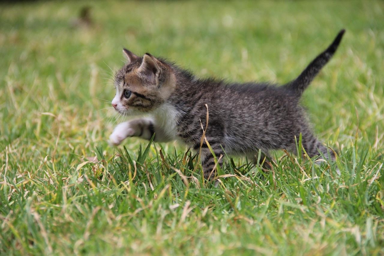 прикольные фото котов (42)