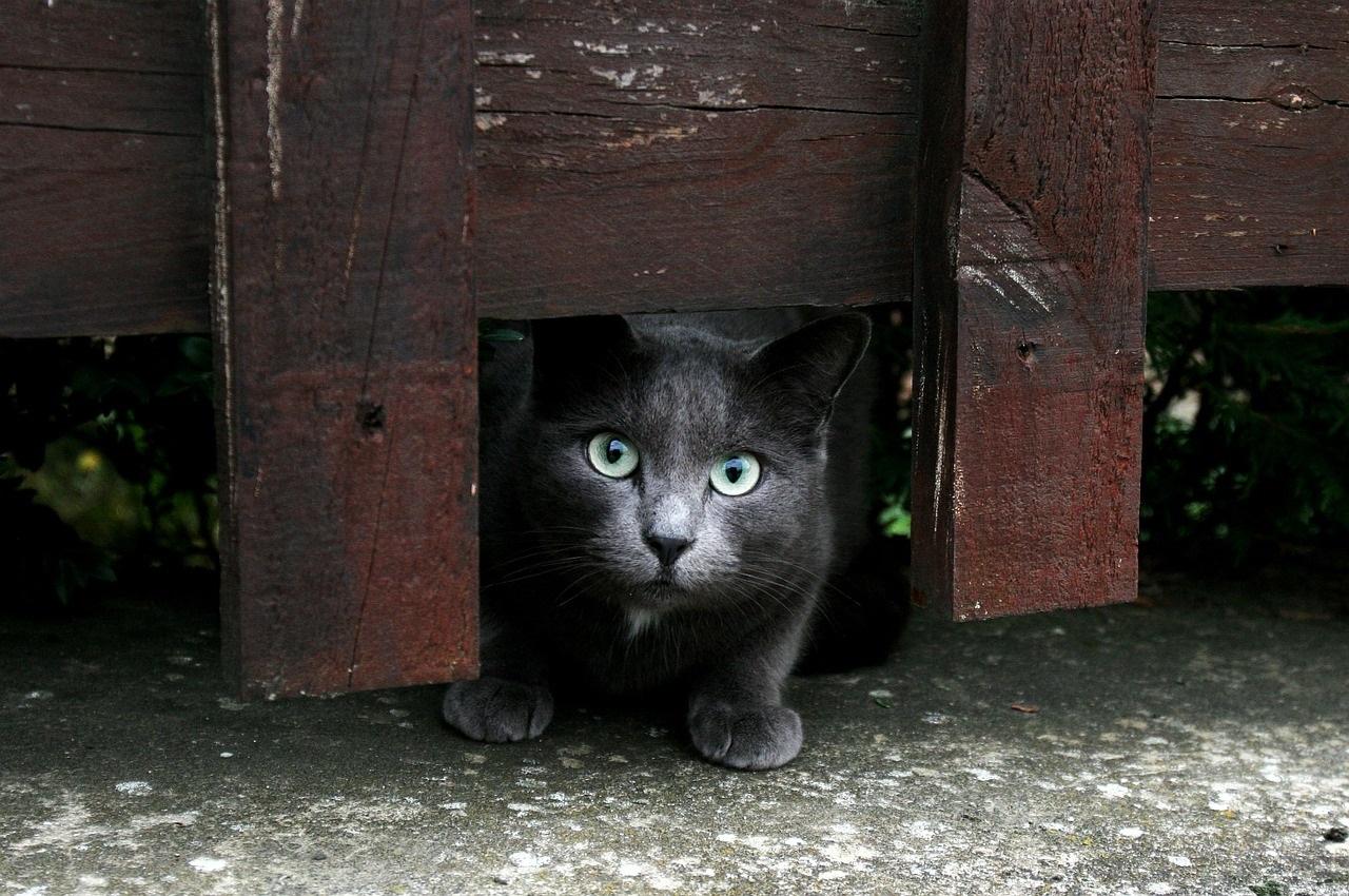 прикольные фото котов (44)