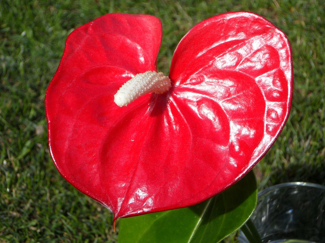 365Цветок с листьями в виде сердца