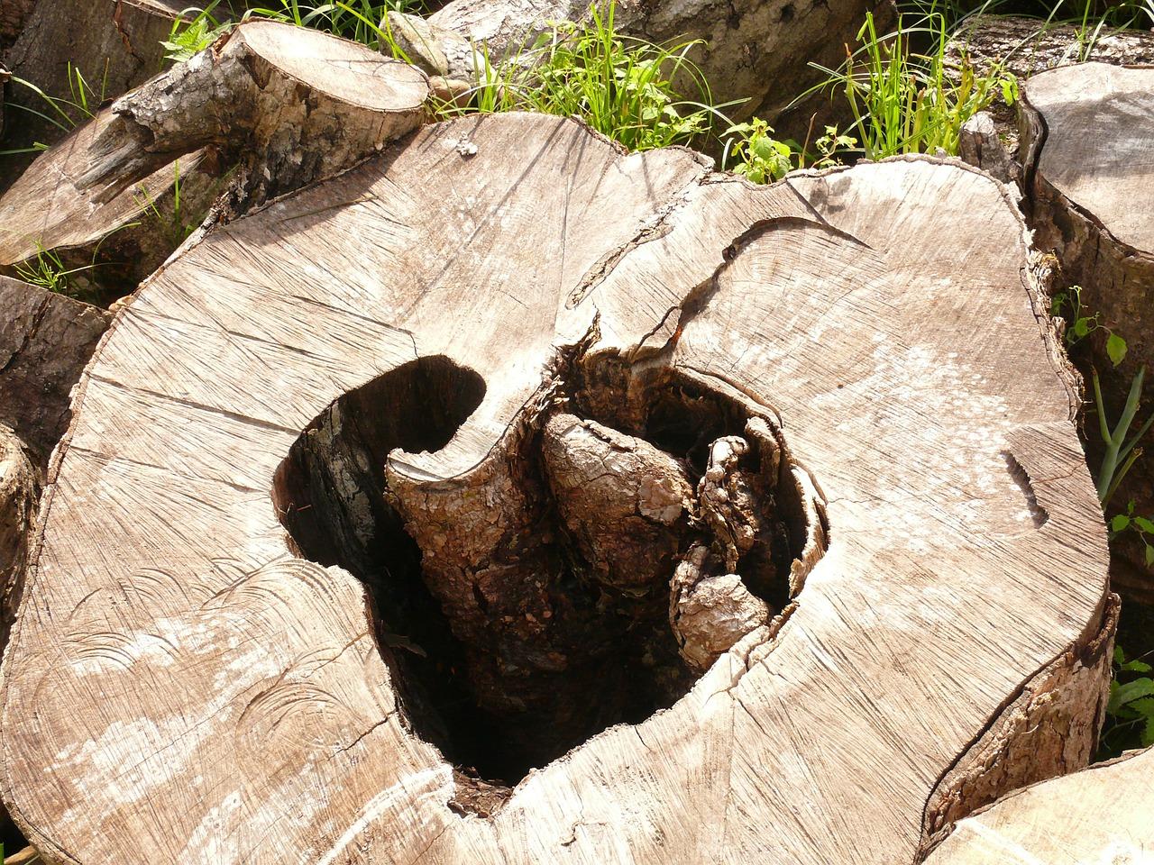 природа в виде сердца 5