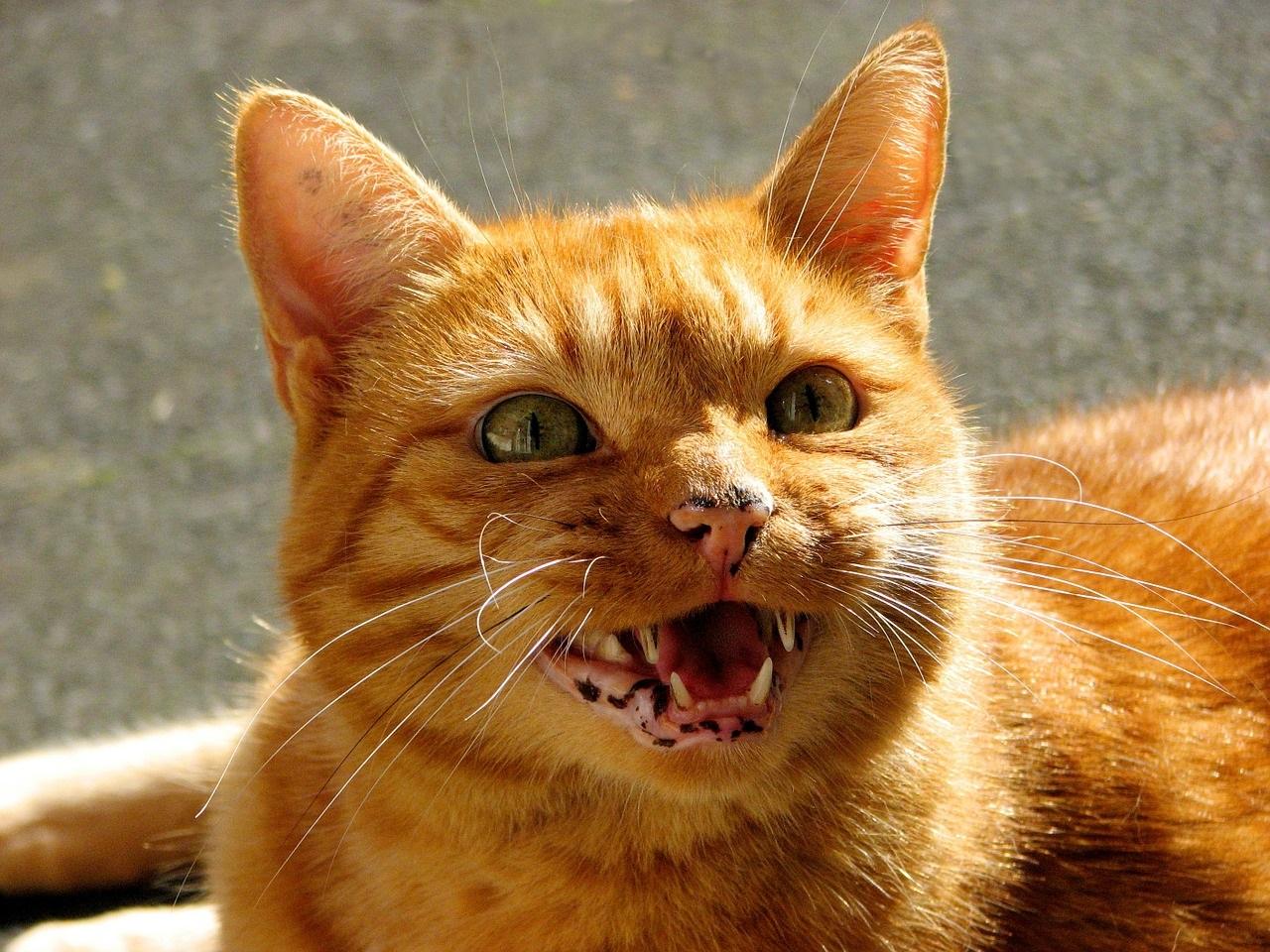 рыжие коты и кошки фото (11)