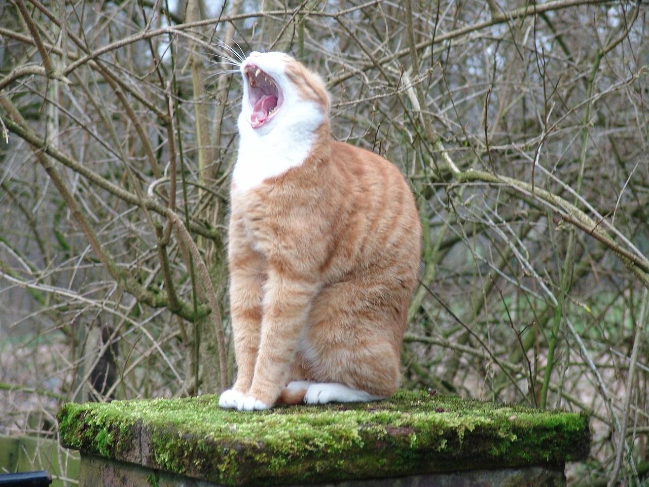 рыжие коты и кошки фото (14)