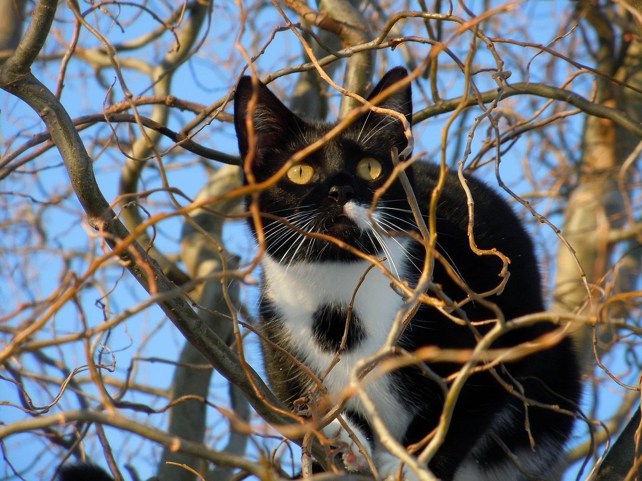 черно-белые коты фото (13)